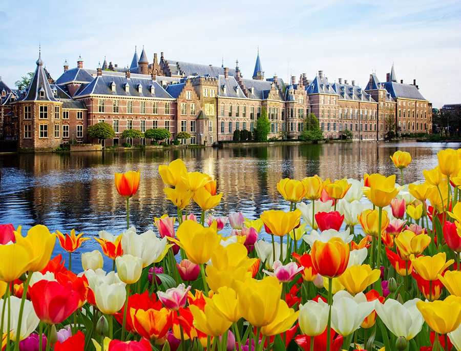 tulips at dutch parliament