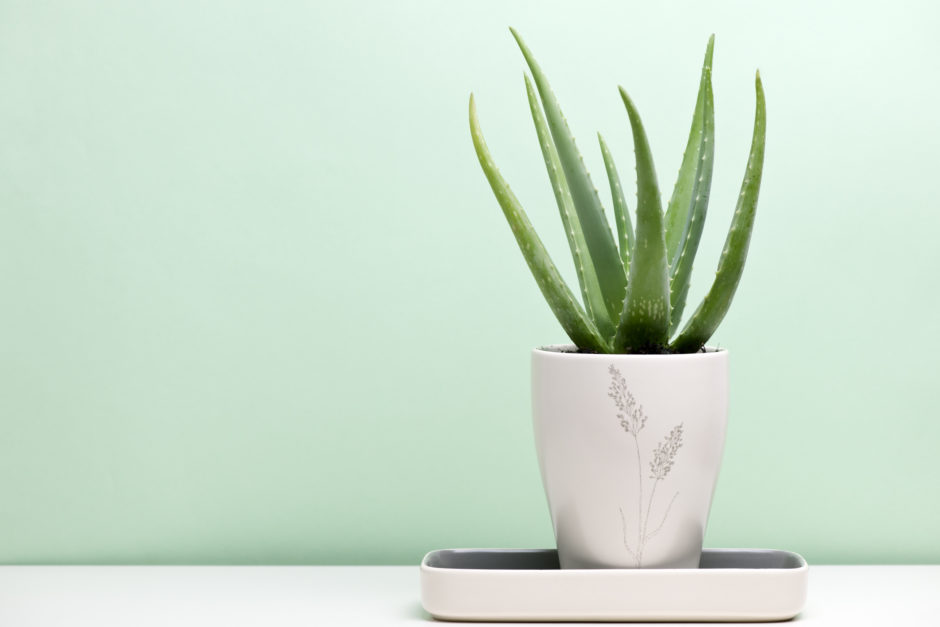 Best Indoor Plants for Your Home | Petal Talk