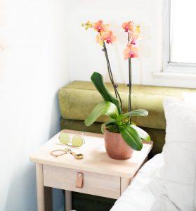 low-maintenance-indoor-plants