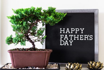 Father's Day green plant