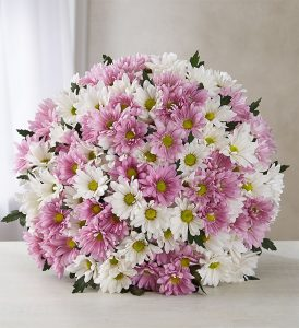 daisy-bouquet-flower-types