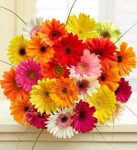 gerbera-daisies-bouquet-flower-types
