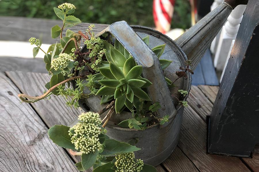 succulent plant container