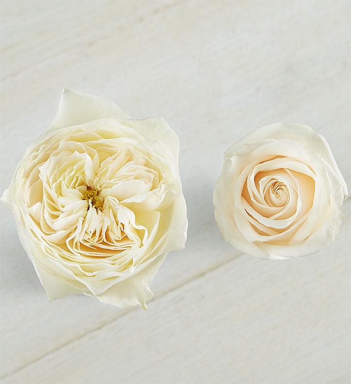 white English garden roses