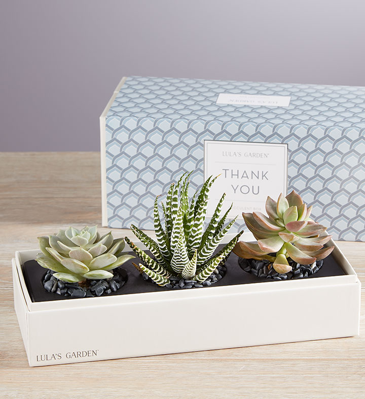 administrative-professionals-day-thank-you-lulas-garden-succulents