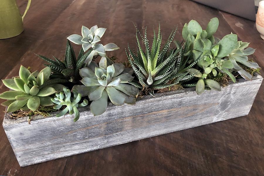 succulent cactus planter