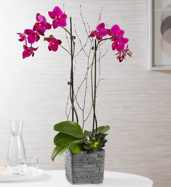 Tranquil Succulent Orchid Garden