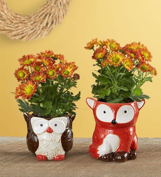 Fall forest friends mini plants