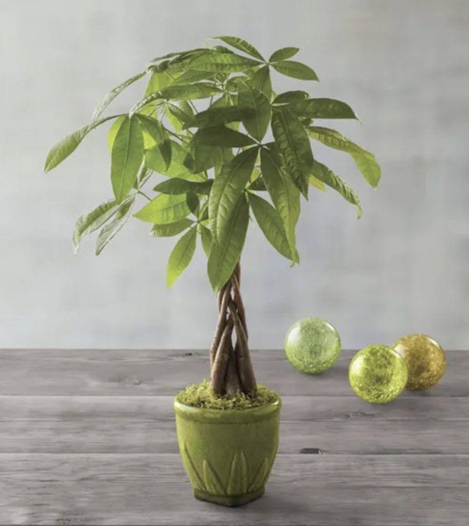 Photo of a money tree, a popular employee gift