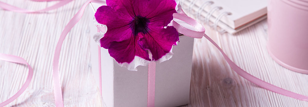 Pink flower on gift box
