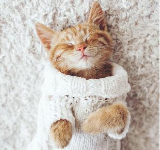 Orange cat in sweater