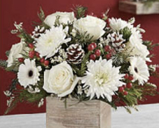 Festive Tidings flowers