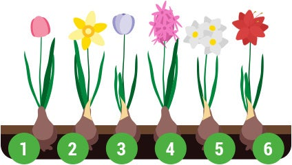 different types of flower bulbs