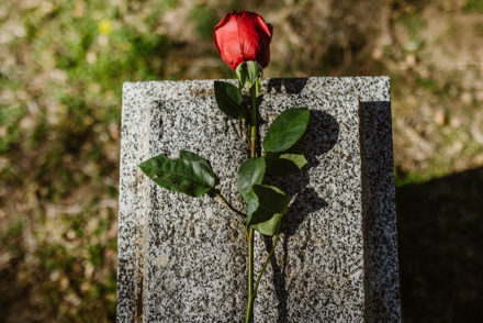 A photo of a rose against a headstone at a cemetery.
