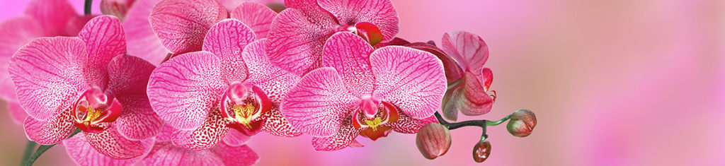 Orchids, a popular flower type, are among the oldest flowers known to man.