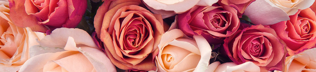 Roses are the most popular flower types,. Their history is very colorful.