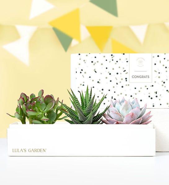 Congrats Succulents