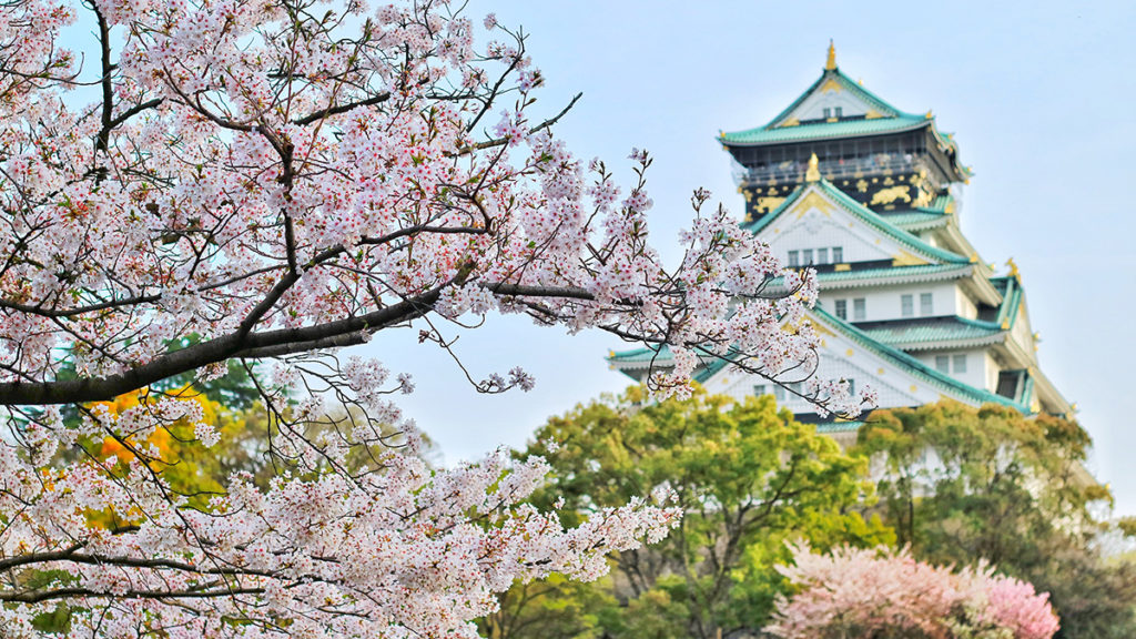 Photo of a pagoda, with popular Japanese flowers (cherry blooms) in foreground