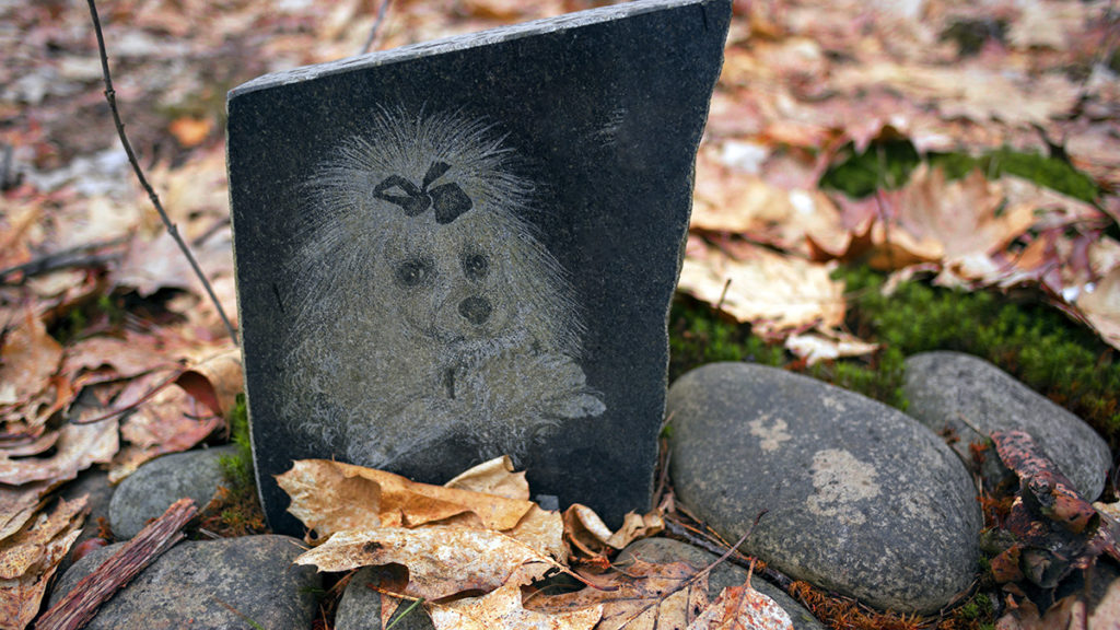 Photo of a memorial to a poodle showcasing one way to express pet sympathy