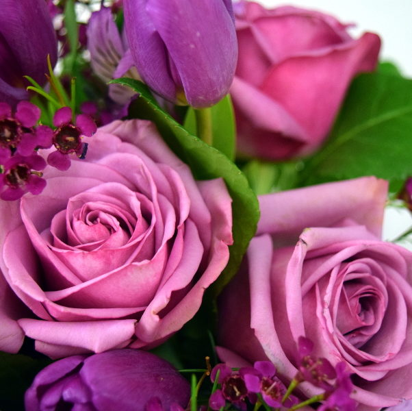If you and your loved one have a storybook, love at first sight romance, purple roses are the flowers for you. With ties to nobility and royalty, purple roses tell the one you love that she is the most important woman in your life and your Queen.